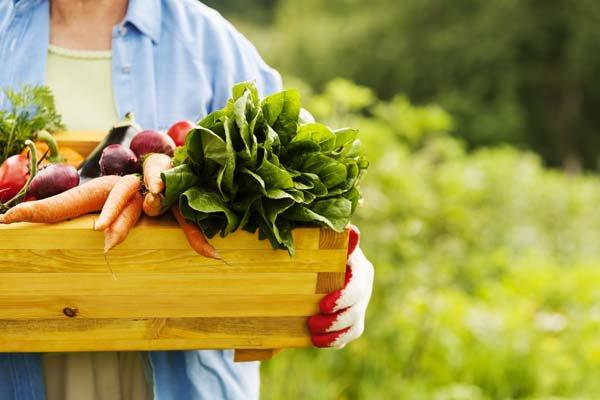 Органическое сельское хозяйство